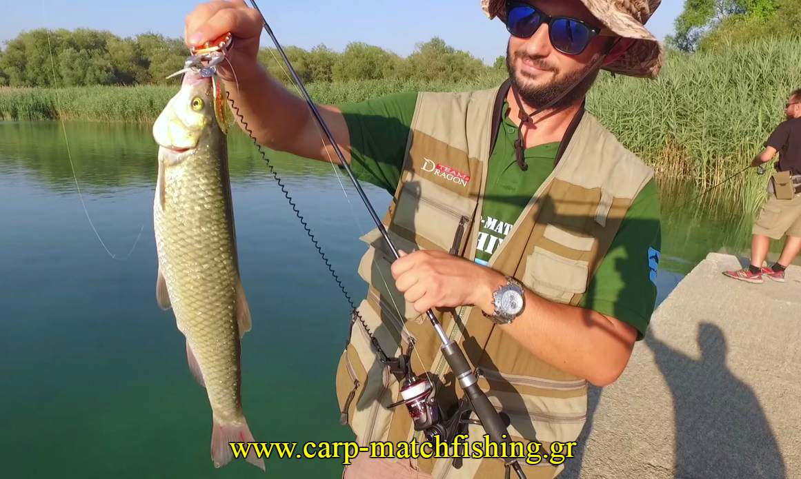limni-spinning-bee-free-chub-carpmatchfishing