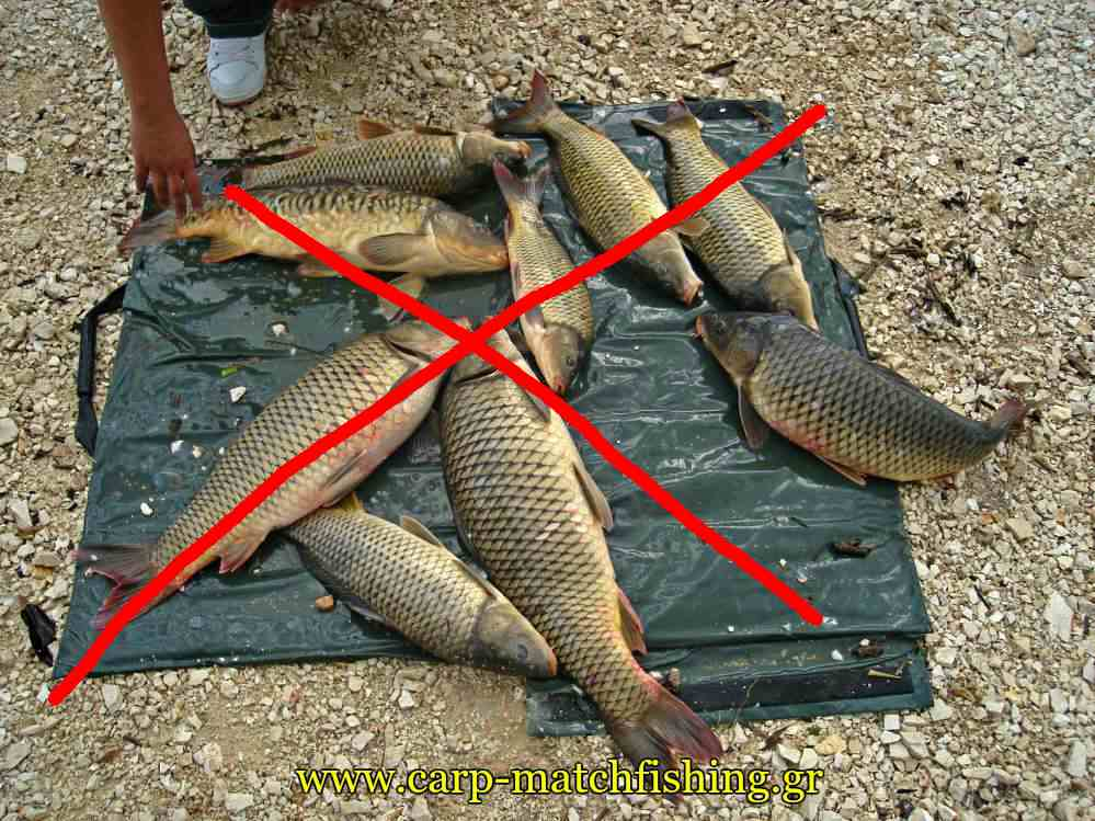 not-so-many-carps-on-unhooking-mat-catch-and-release-carpmatchfishing