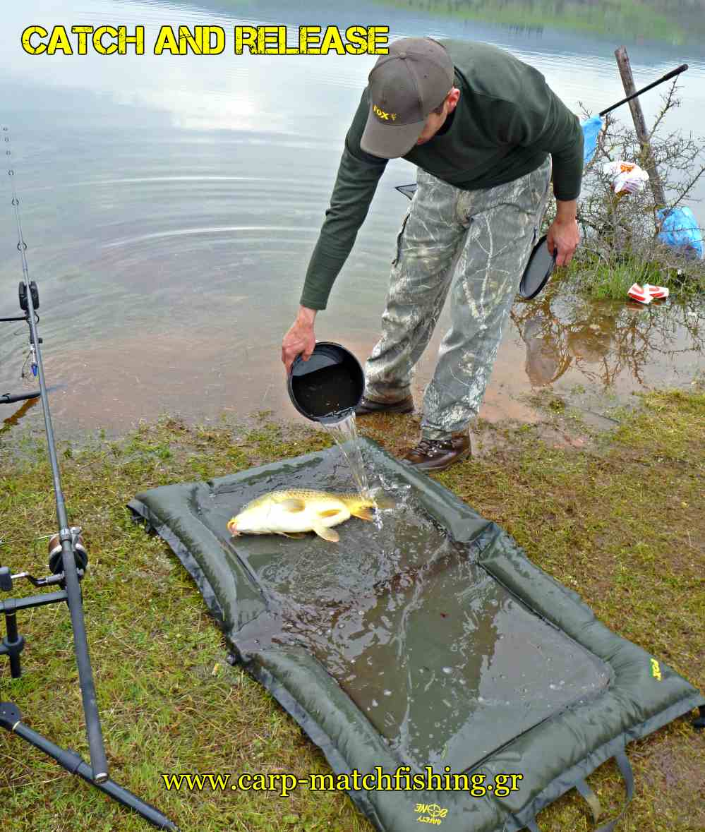 water-to-carp-catch-and-release-carpmatchfishing