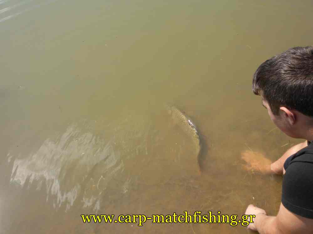 short-sessions-catch-and-release-carpmatchfishing