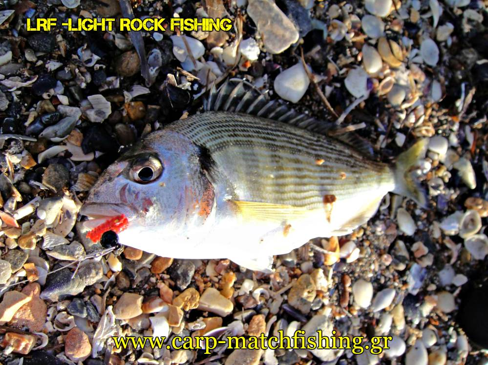 lrf-tsipoures-crabs-light-rock-fishing-carpmatchfishing