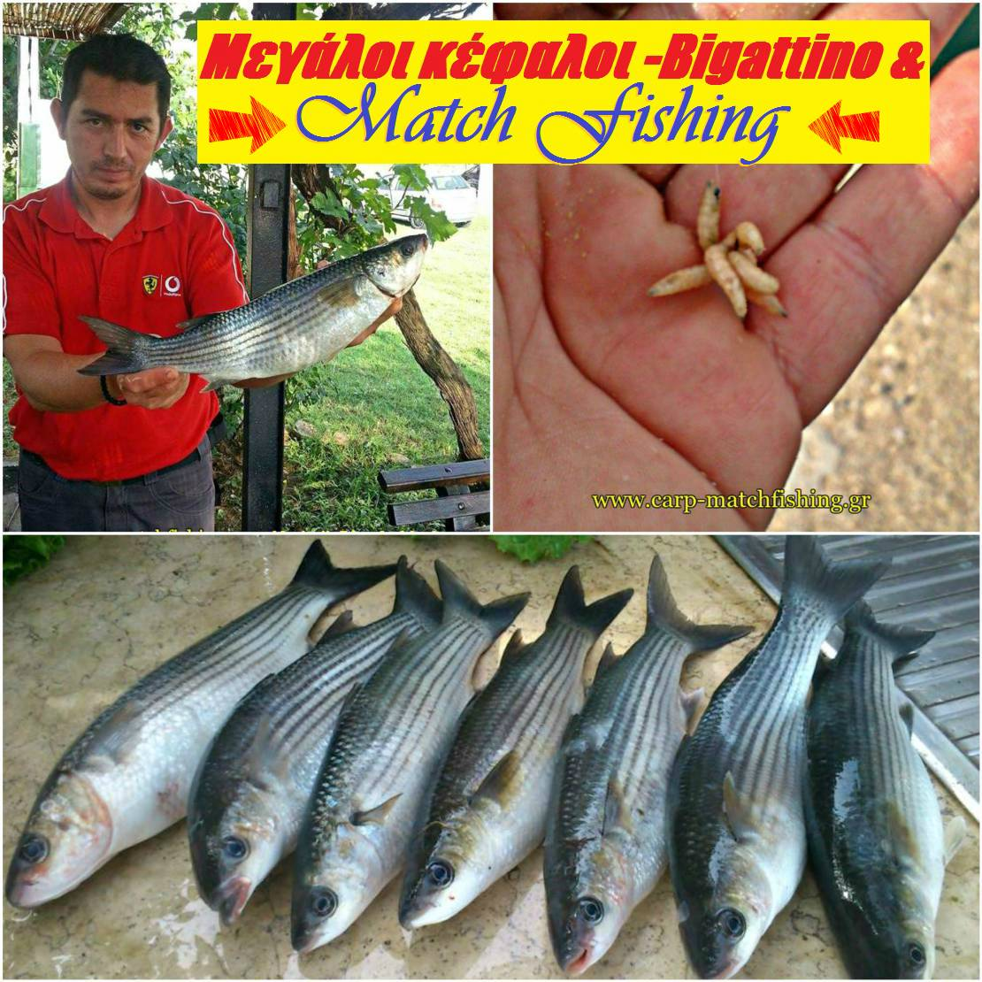 Matchfishing-big-kefalos-mullet-2-carpmatchfishing