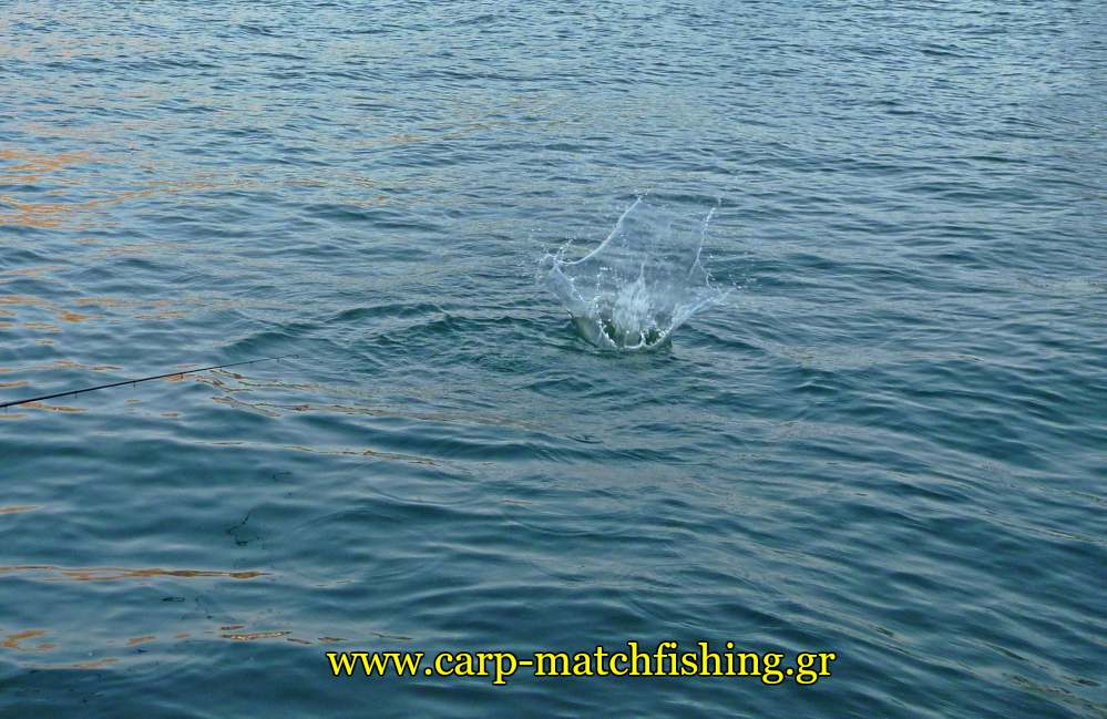 groundbait-splash-water-melanouria-match-fishing-carpmatchfishing