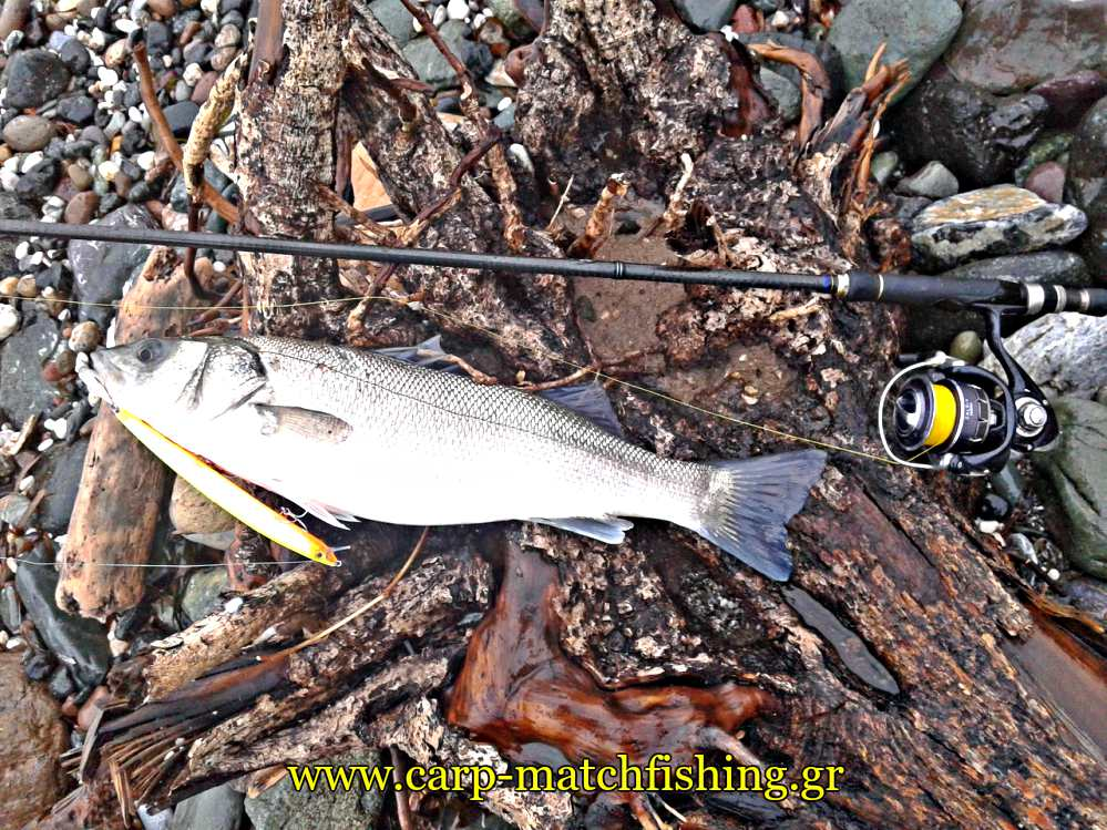 spinning-tips-sae-bass-beach-fishing-carpmatchfishing