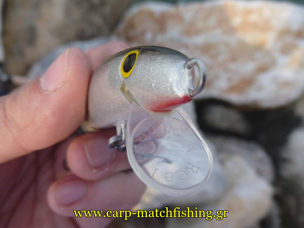 real-winner-glossa-minnows-carpmatchfishing