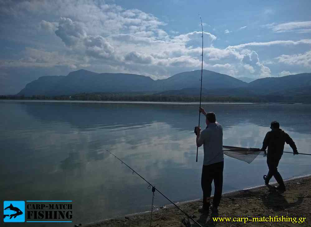 festival carpfishing fish on carpmatchfishing