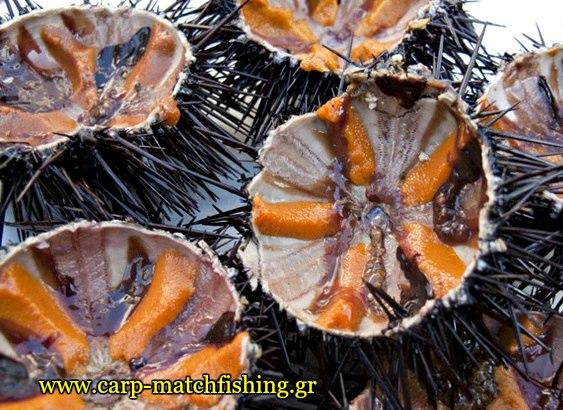 prostima-gia-psarema-axinon-2-carpmatchfishing