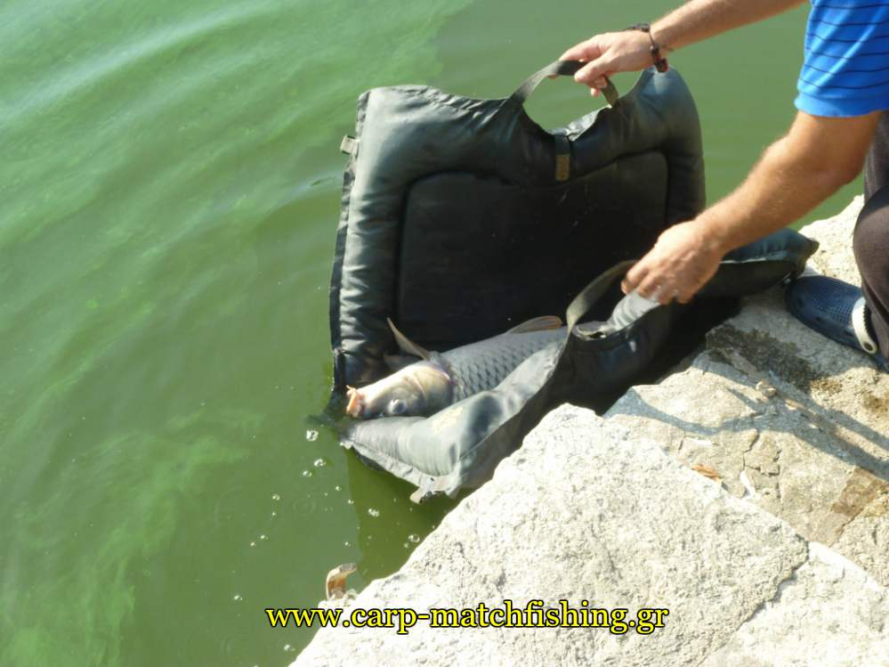 catch-and-release-carp-giannena-carpmatchfishing