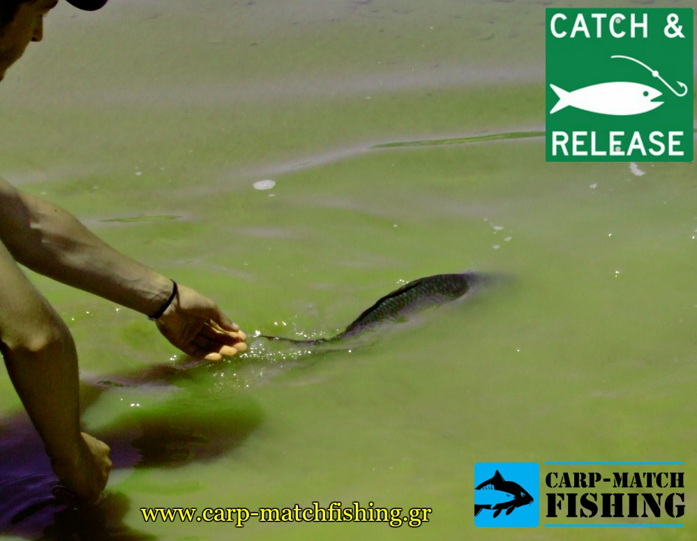 catch and release carp carpmatchfishing