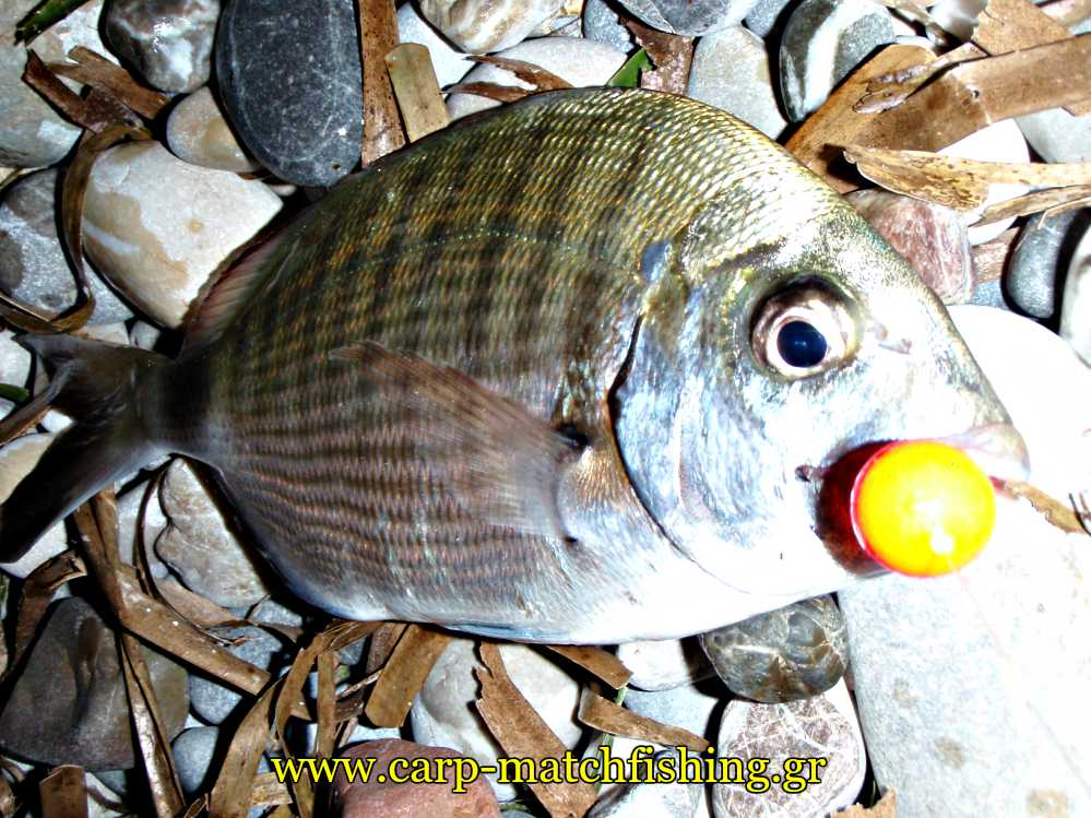 sargos-float-surfcasting-carpmatchfishing