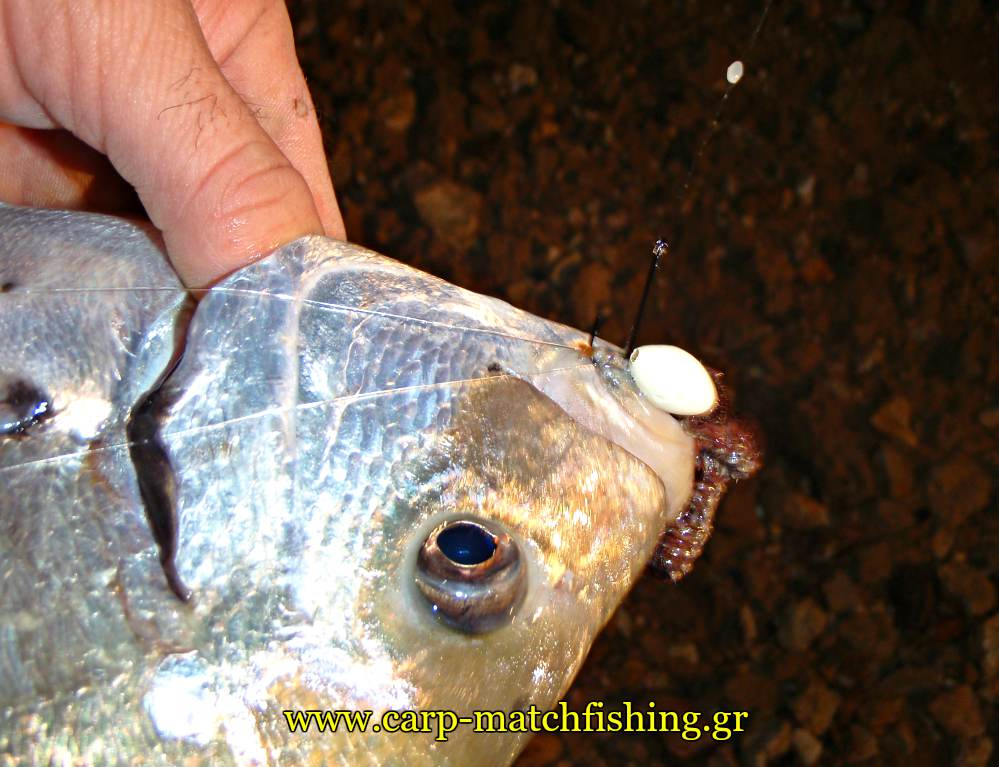 rock-fishing-sargos-farao-float-carpmatchfishing