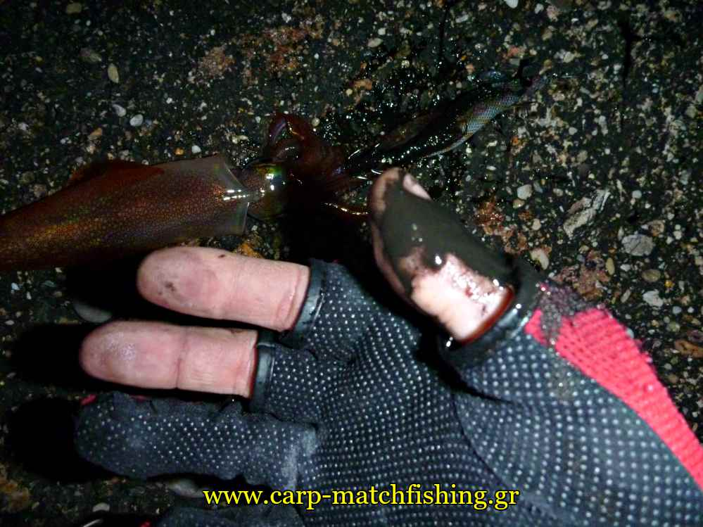 eging-inks-squid-hands-carpmatchfishing