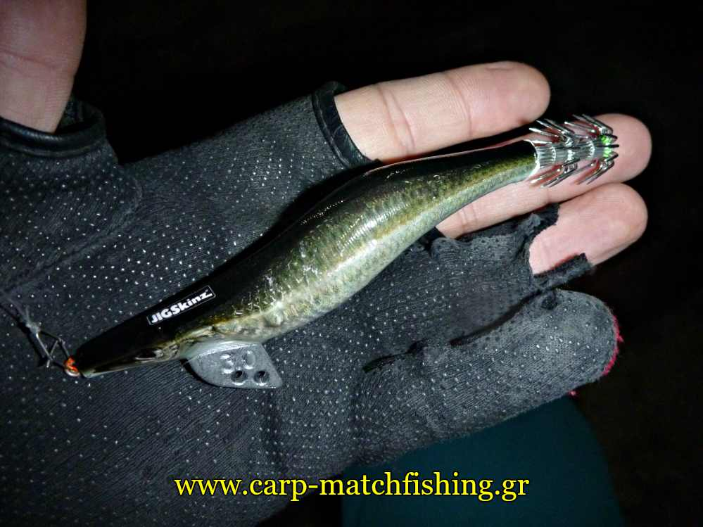 eging-squid-jig-sardine-carpmatchfishing