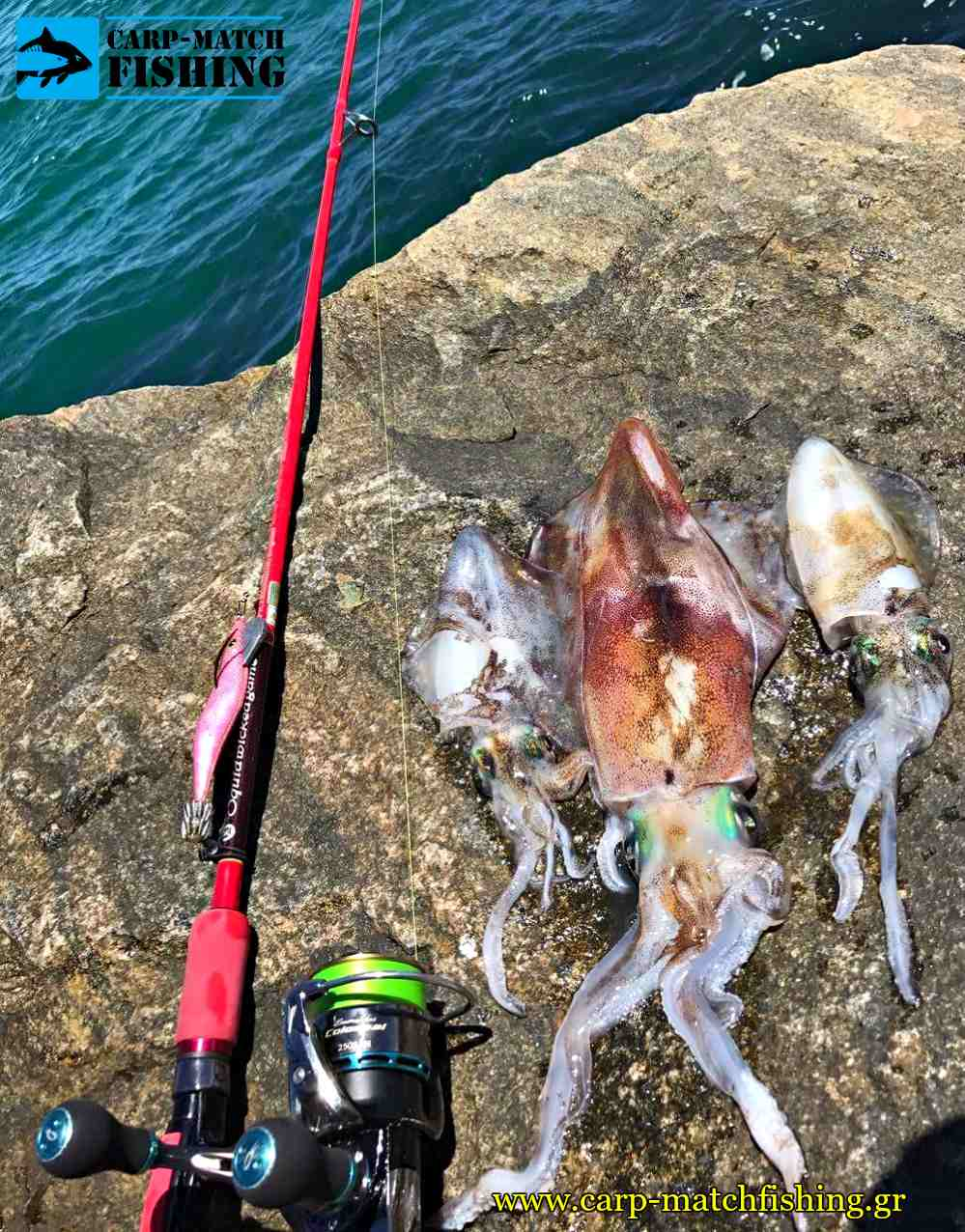 eging fuii of squids on the rocks vraxia carpmatchfishing