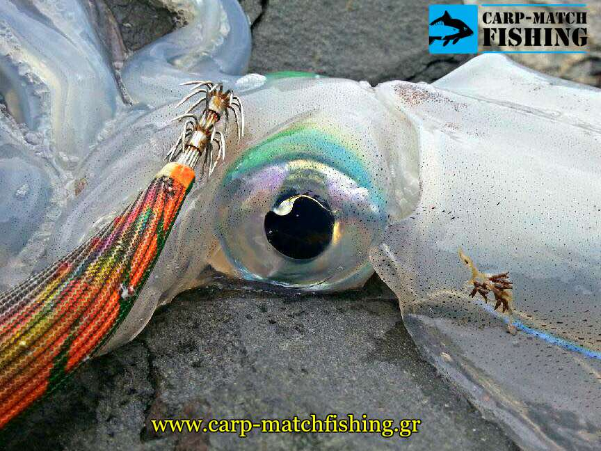 squid jig actions rainbow jig squid psarema kalamariou carpmatchfishing