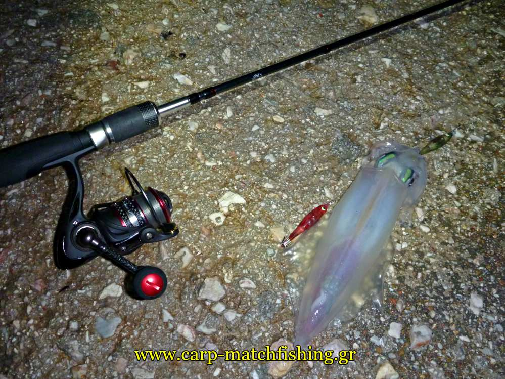 shore-tataki-rod-squid-carpmatchfishing