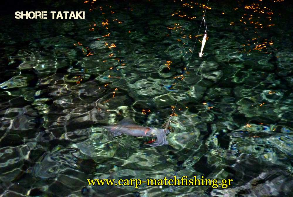 shore-tataki-water-squid-eging-carpmatchfishing