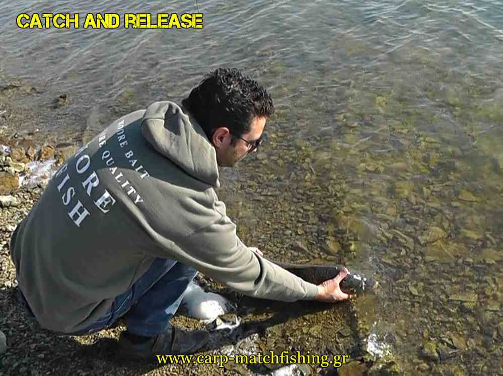 catch-and-release-pl-carp-carpmatchfishing