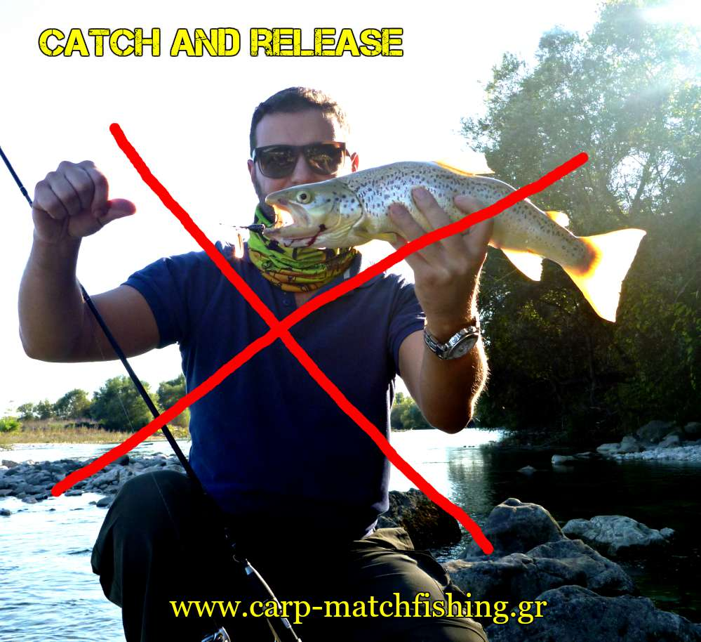 catch-and-release-trout-belly-carpmatchfishing