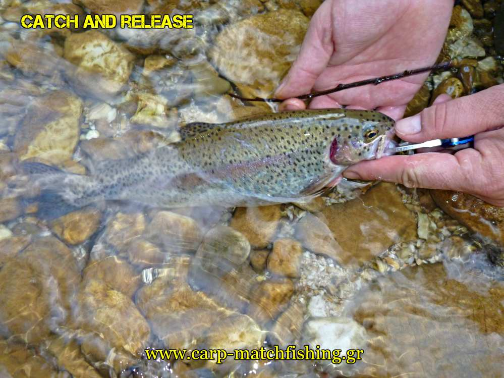 rainbow-trout-water-catch-and-release-carpmatchfishing