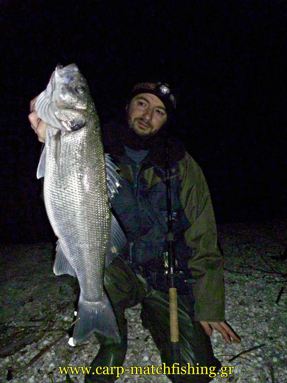 sea-bass-grounbait-angry-fish-sfaltos-carpmatchfishing