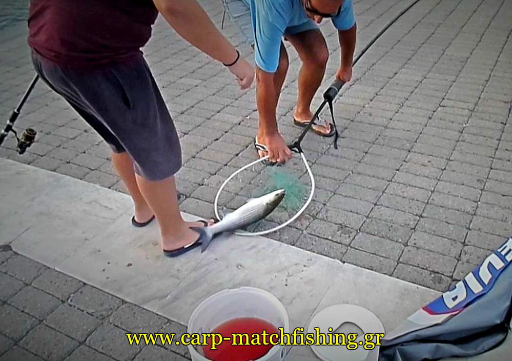 kefalos-stin-apoxi-match-fishing-psomi-carpmatchfishing