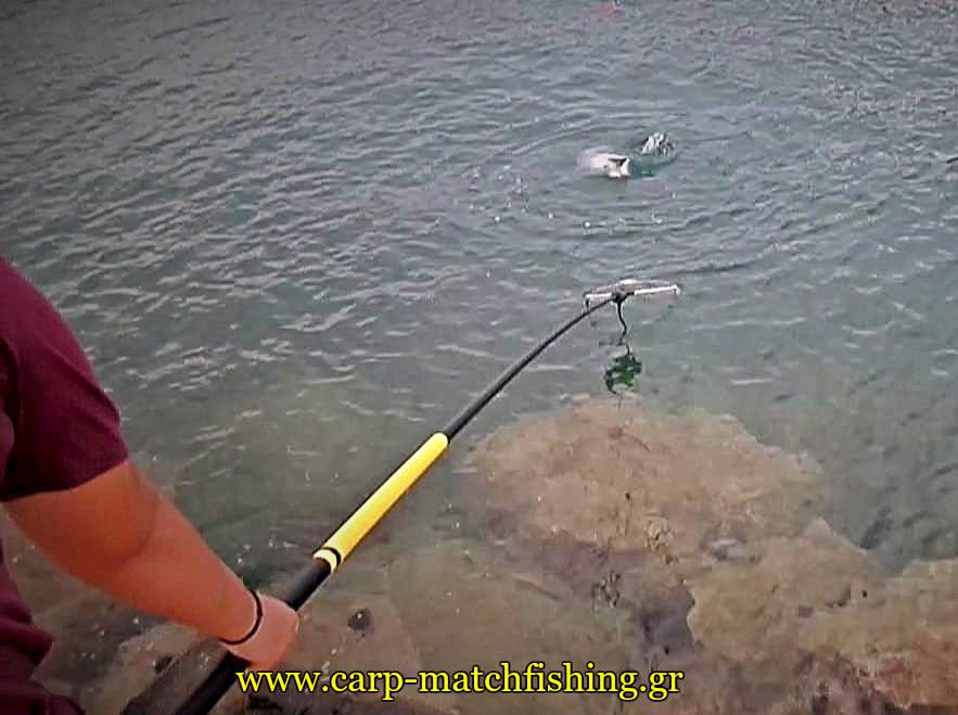 match-fishing-kefaloi-apoxi-carpmatchfishing