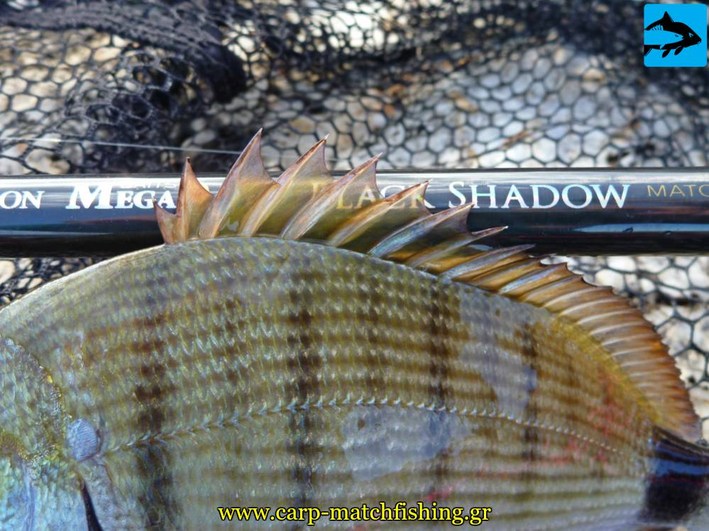 sargos fin psarema match rods dragon black shadow carpmatchfishing