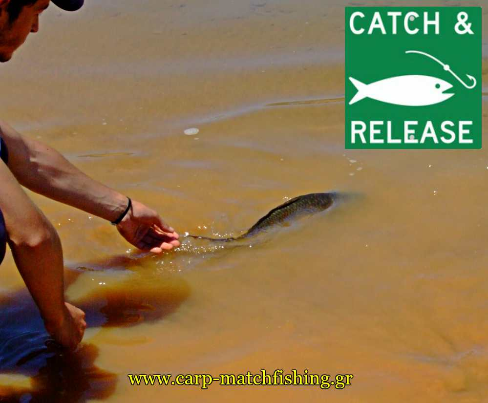 catch and release carps pl carpmatchfishing