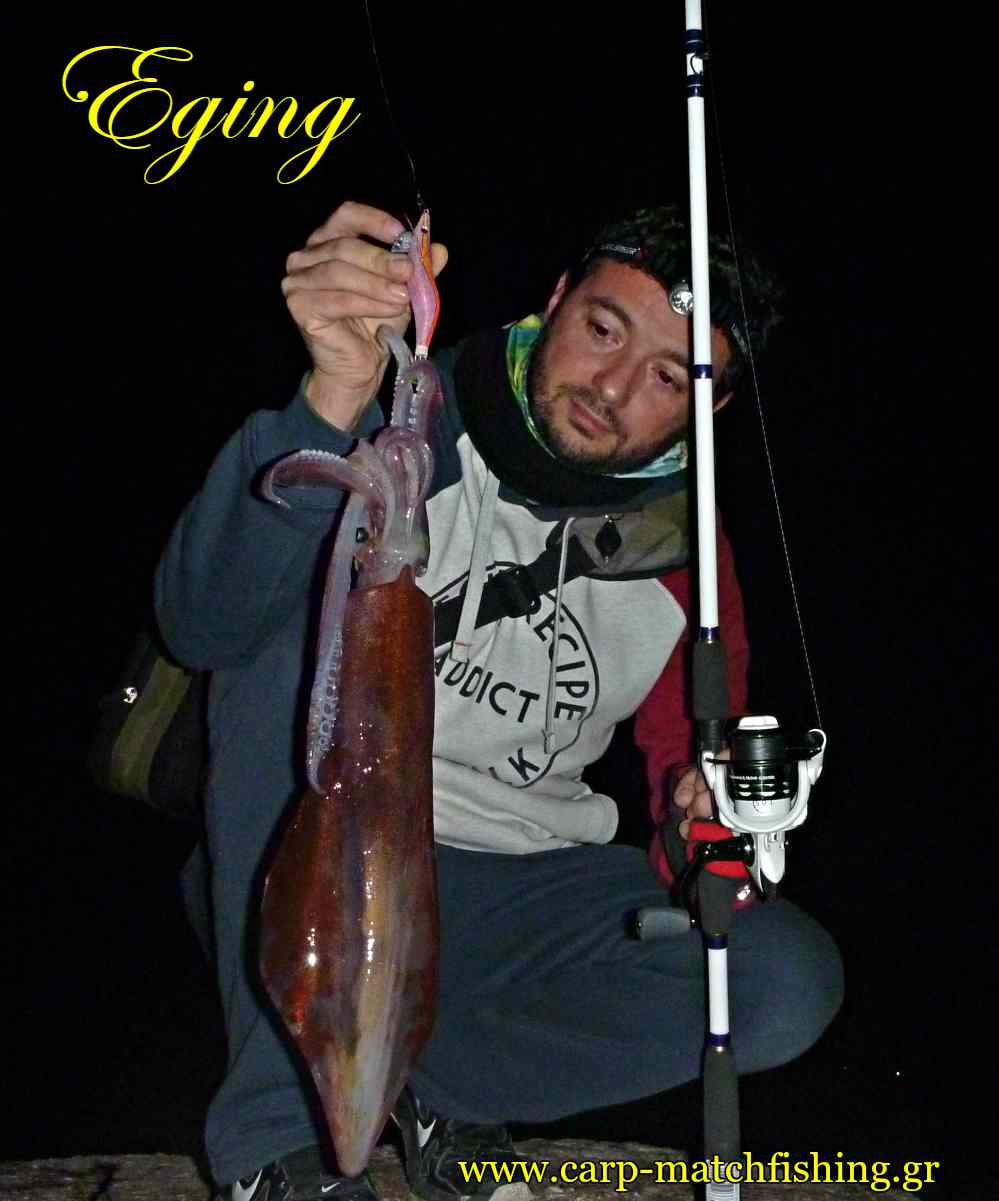 eging-sfaltos-squid-carpmatchfishing