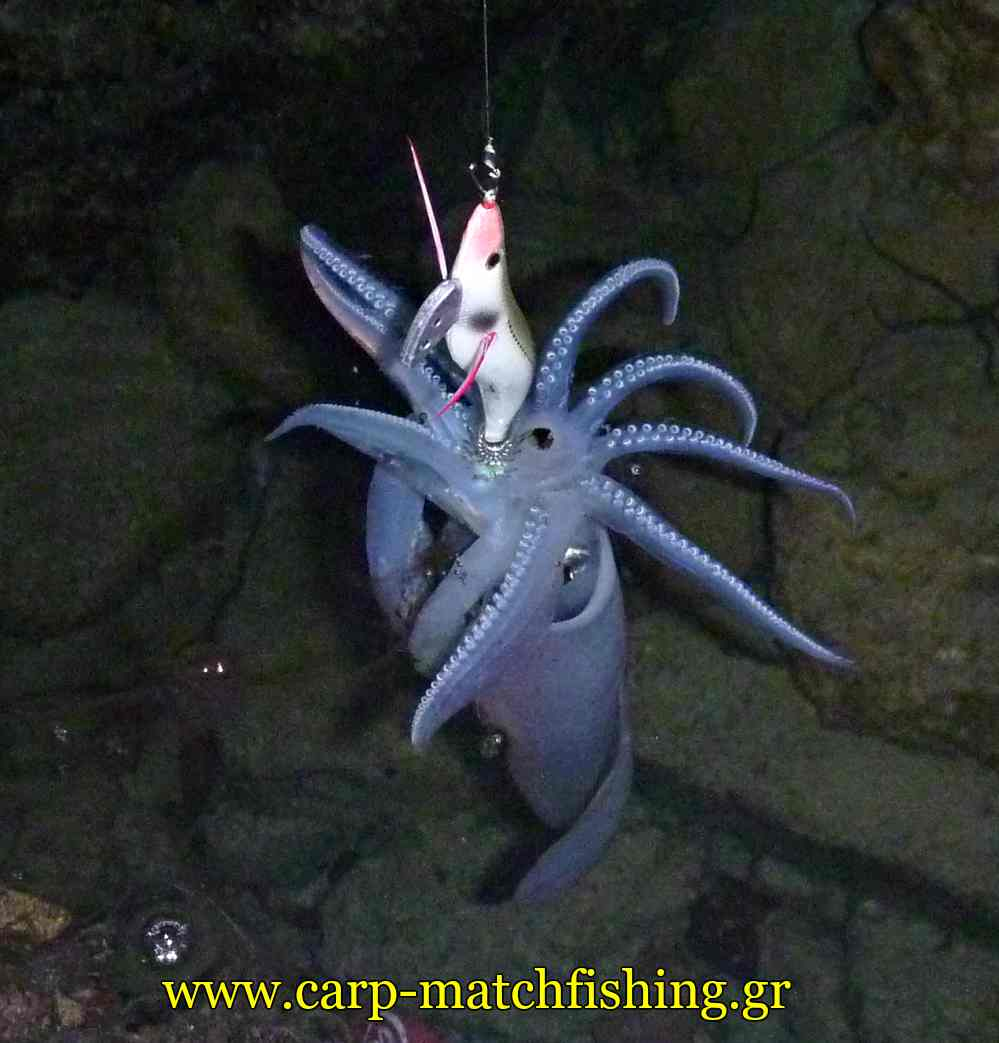 eging-squid-jig-sfaltos-carpmatchfishing