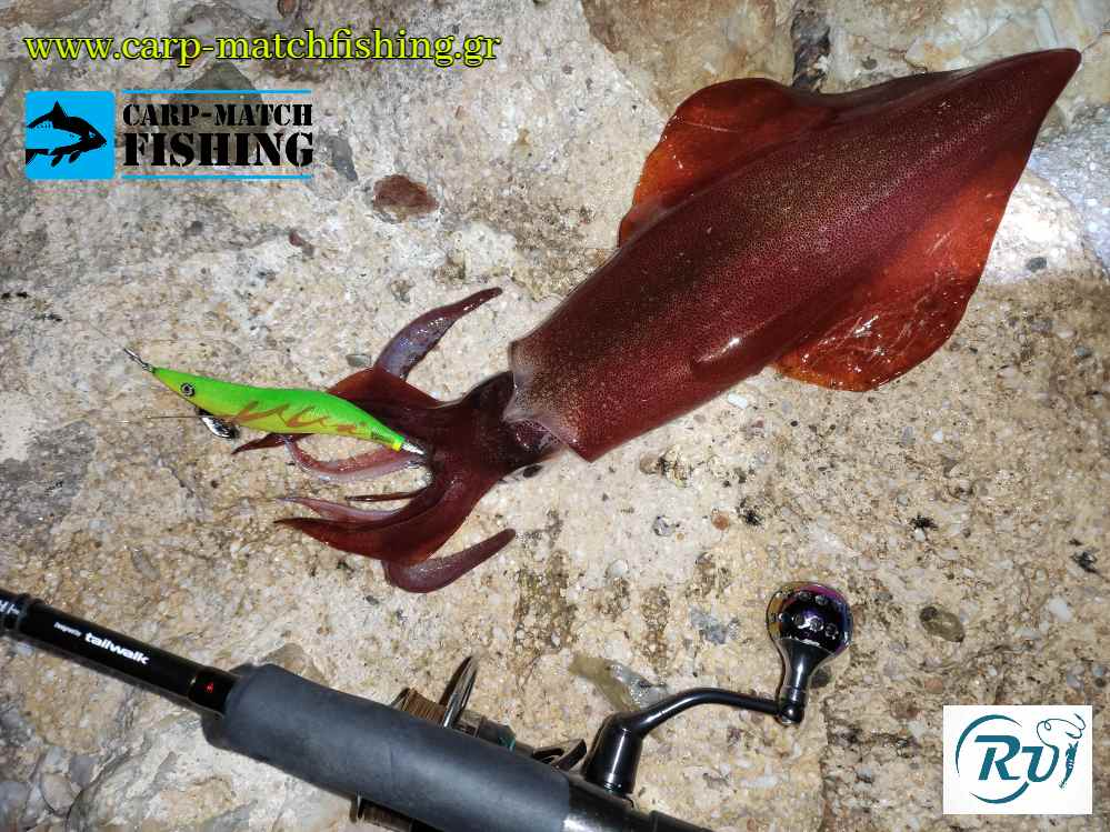 rui glow squid jig carpmatchfishing