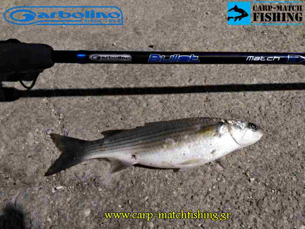bullet match mullet garbolino dokimi match carpmatchfishing