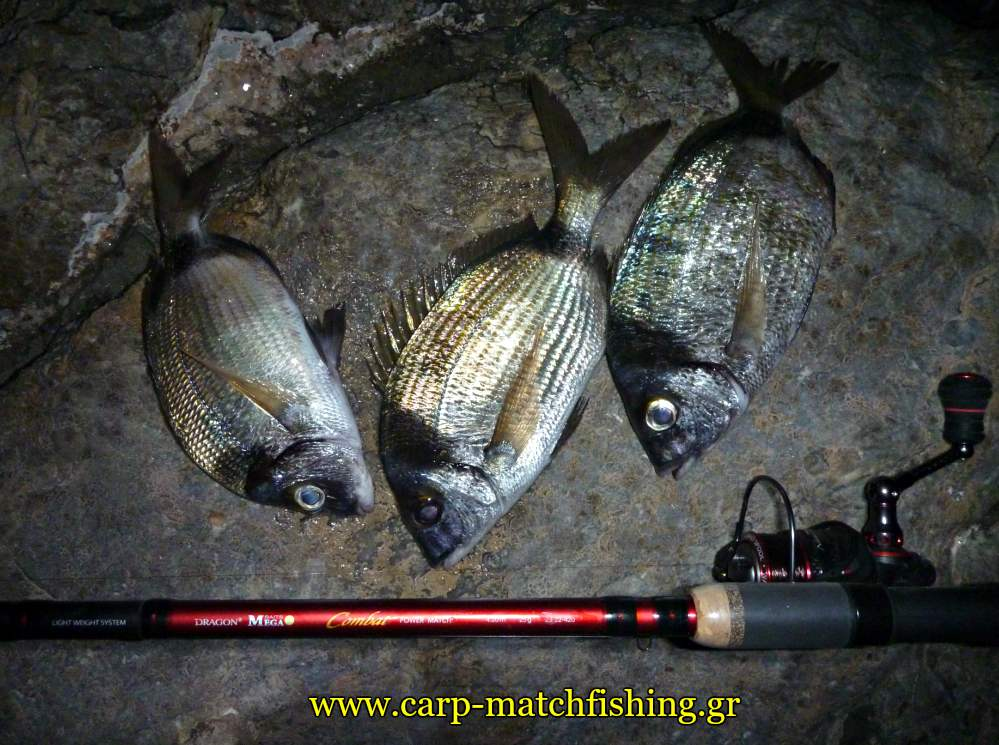 dragon-power-match-combat-3-sargoi-carpmatchfishing