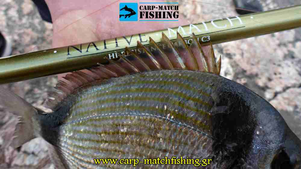 native match fins vega rod carpmatchfishing