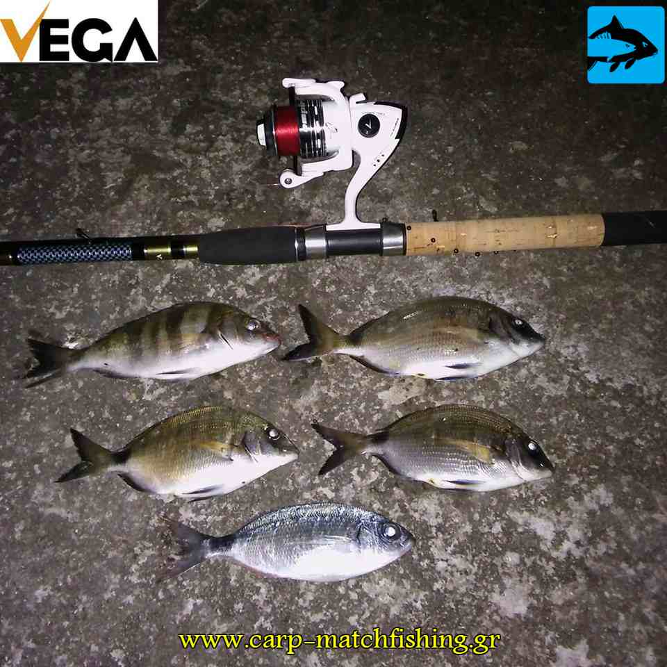 sargoi auliades vega native match rod carpmatchfishing