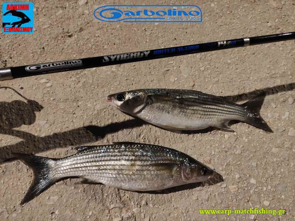 mullets garbolino synergy slider match rod carpmatchfishing