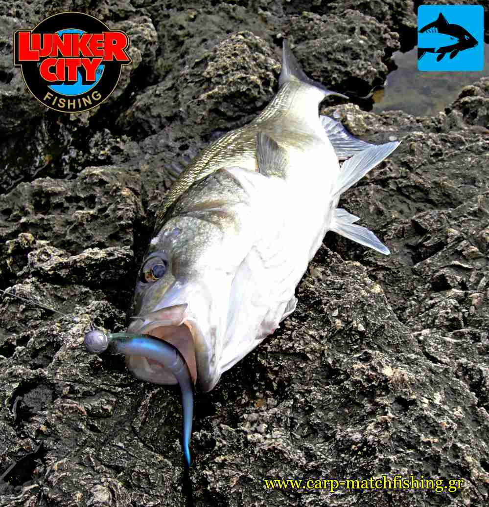 lunker city slug go labraki sea bass carpmatchfishing