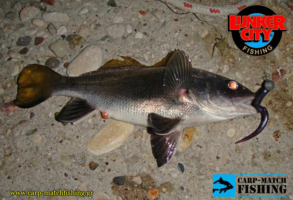 slug go lunker city sikios spinning carpmatchfishing