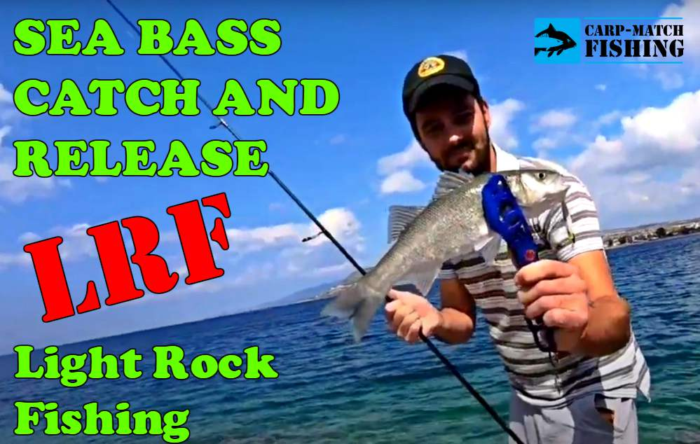 sea bass catch and release lrf carpmatchfishing