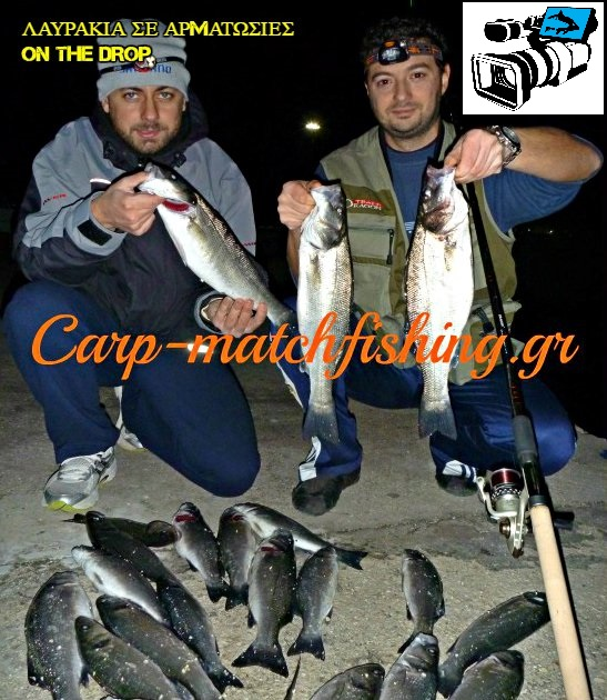 sea-bass-in-match-fishing-eggleziko-carpmatchfishing